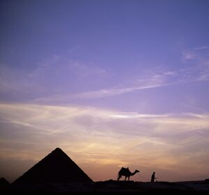 Camel and pyramid in silhouette, Giza, near Cairo, Egypt, North Africa, Africa