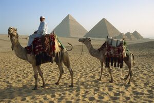 Camels and rider at the Giza Pyramids, UNESCO World Heritage Site, Giza