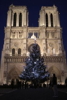 christmas tree notre dame paris cathedral paris