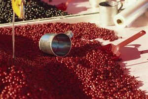 Close-up of market stall selling cranberries,