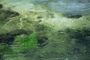 Close-up of water whirling over green rocks
