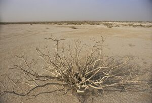 Desert plant between Nouadhibou and Nouakchott