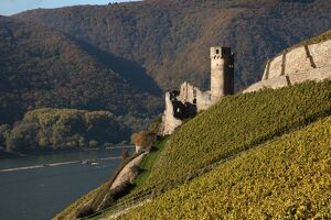 Ehrenfels Castle near Rudesheim, Rhine Valley, Hesse, Germany, Europe