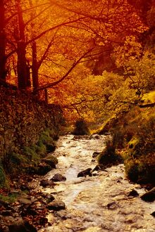 Fall foliage and running stream, Grindsbrook Edale, Peak District, Derbyshire