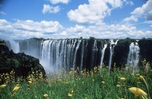 Flowers in bloom with the Victoria Falls behind, UNESCO World Heritage Site