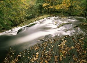Force Falls in autumn, Ruscand Valley, Lake District National Park, Cumbria