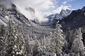Fresh snow fall on El Capitan in Yosemite Valley