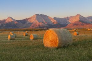 hay bales field rocky mountains background near