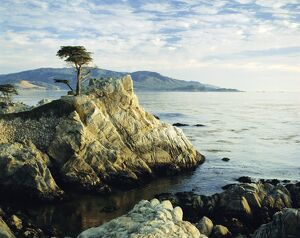 The Lone Cypress Tree on the coast