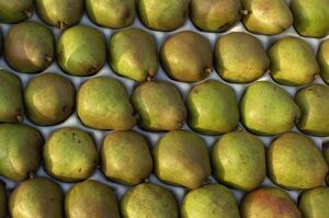 Overhead view of rows of pears in packaging