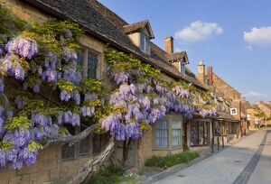 Purple flowering wisteria on a Cotswold stone house wall in the village of Broadway