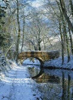 Snow on the Basingstoke Canal, Stacey's bridge and towpath, Winchfield