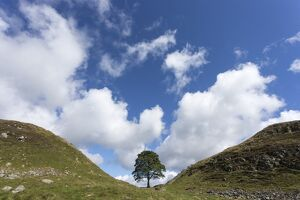Sycamore gap, Hadrian's Wall, UNESCO World Heritage Site, Northumberland, England