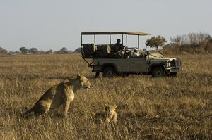 Tourist taking pictures of lioness and cub, Busanga Plains, Kafue National Park