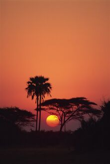 Tranquil scene of trees silhouetted against the sun at sunset, Okavango Delta