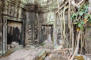 Tree roots growing on Ta Prohm temple (Rajavihara) ruins, Angkor, UNESCO World Heritage Site