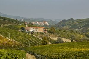 Vineyard Landscape of Piedmont: Langhe-Roero and Monferrato (Selection of 59 Items)