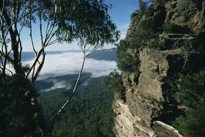View from the Three Sisters of Jamison valley under fog, Blue Mountains National Park