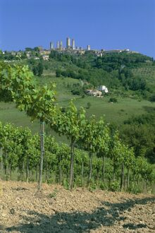 Vineyards below the town of San Gimignano