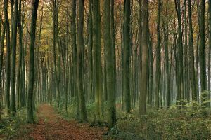 Woodland in autumnal hues
