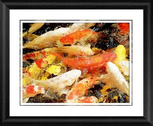 Koi Carp in Japan Framed Photographic Print