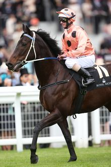 Black Caviar at Royal Ascot
