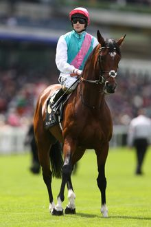 Frankel ridden by Tom Queally - Royal Ascot 2012