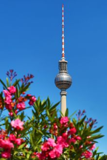 Berlin TV Tower, Fernsehturm, television tower and flowers in spring in Berlin, Germany