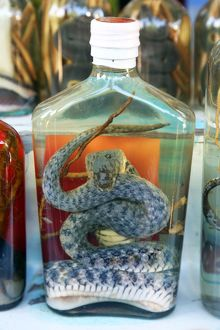 Bottle of Snake Whiskey in Whisky Village near Luang Prabang, Laos