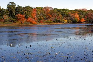Changing colours of the Autumn / Fall season at a lake in Provincetown, Cape Cod