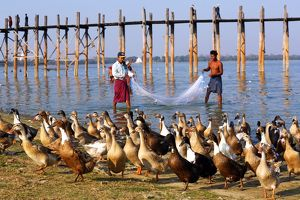Ducks and the U Bein Bridge in Amarapura, Mandalay, Myanmar