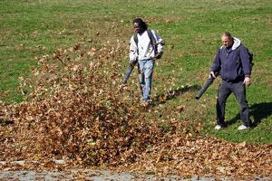 Fallen leaves being cleared during the Fall season of Autumn