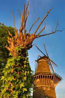 The De Gooyer Windmill and tree with ivy in Amsterdam, Holland