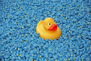 <b>Great British Duck Race</b><br>Selection of 45 items