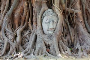 The head and face of Buddha in the roots of a Bodhi tree in Wat Mahathat, Ayutthaya