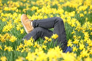 <b>Spring Daffodils</b><br>Selection of 11 items