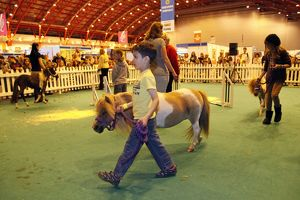 Miniature pony display at the London Pet Show