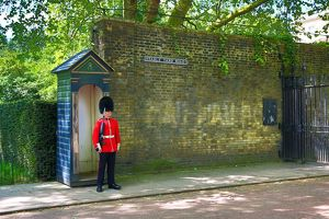 Queen's Guard wearing busby guarding St James Palace, London, England