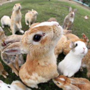 <b>Rabbit Island, Japan</b><br>Selection of 18 items