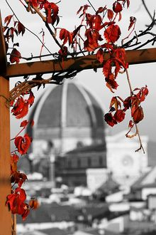 Red autumn leaves and the Duomo, Santa Maria del Fiore, Florence, Italy, spot colour