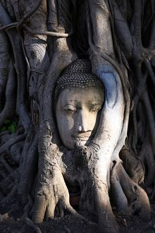 The stone head of Buddha statue in roots of a Bodhi tree, Wat Mahathat, Ayutthaya
