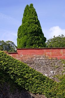Tree and wall