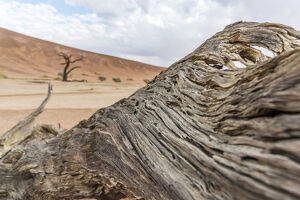 new/20191004 awl 7/africa namibia sossusvlei area dead vlei close