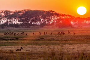 new/20191004 awl 10/africa zambia sunset kafue national park group