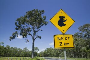 Australia, Queensland, Fraser Coast, Maryborough, Koala Crossing Sign on the Bruce Highway