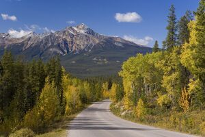 Autumn colours lining the road from Jasper to Maligne lake