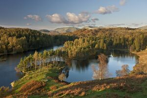Autumn colours at Tarn Hows nearr Hawkshead, Lake District, Cumbria, England