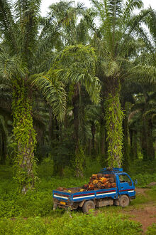 new/20191004 awl 1/burundi palm oil tree plantations line shores