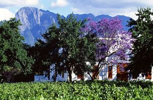 Cape Dutch farmstead vineyard near Franschoek
