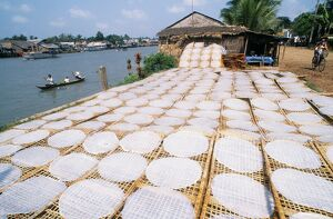 Drying rice noodles in the sun beside the Mekong River in Sa Dec